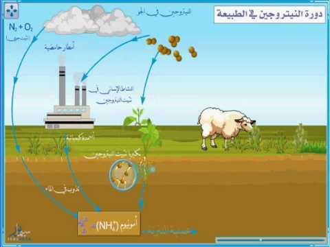 دورة النيتروجين في الطبيعة