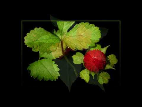 Documentos fotográficos - Plantas