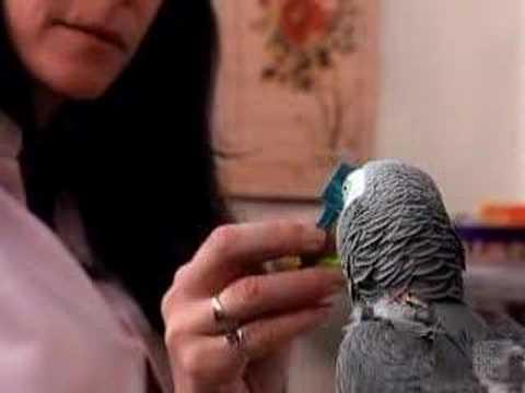 Alex The Parrot -ldYkFdu5FJk
