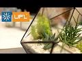 🌿 МАСТЕР КЛАСС 🌿 | Флорариум - маленький сад своими руками