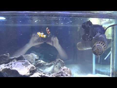 125 gallon saltwater tank soon to be reef tank