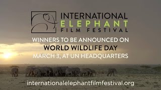 International Elephant Film Festival