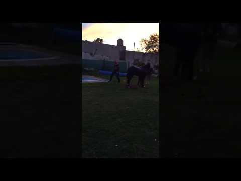 Rescataron a un caballo que se cayó en una piscina