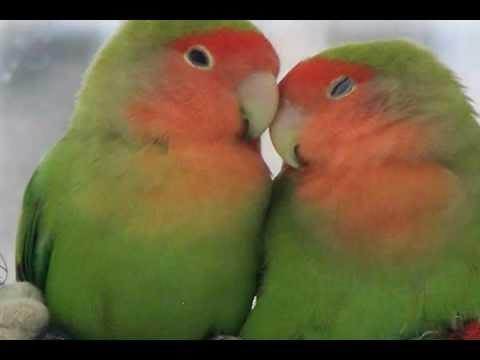 Sounds of Nature: Bird Songs (No Music) 30 min