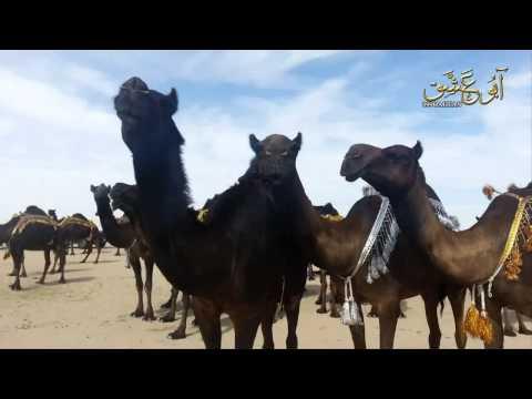 شيلة حب المجاهيم / كلمات خالد بن مدعث الدوسري / أداء السلطان / جديد 2014