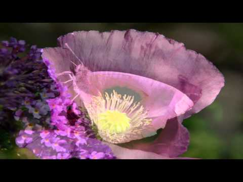 Sincerity - Inspirational Meditation #4 -  wisdom of Dadi Janki - Brahma Kumaris
