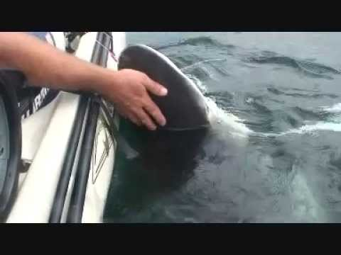 extreme kayak fishing australia, kayak attacks shark
