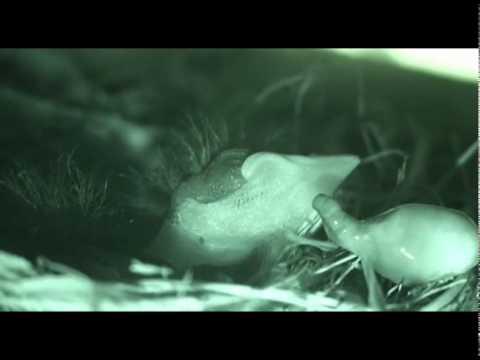 fauna del amazonas colombiano parte 1