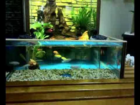 Cichlid fsh tank / open bottom