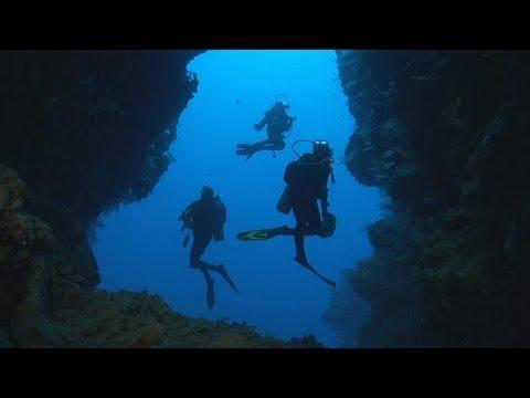 Dakuwaqa-s Garden - Underwater footage from Fiji & Tonga