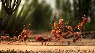 Clever Ants