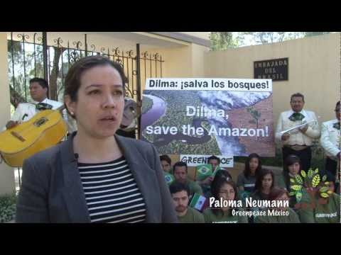 Dilma: ¡salva la Amazonia!