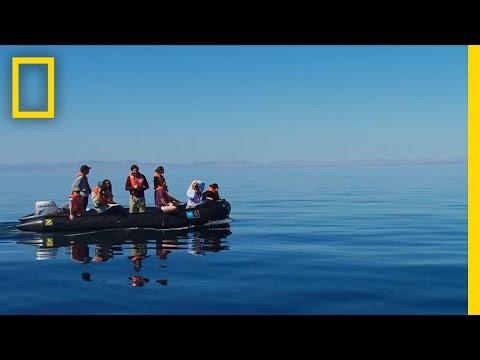 فيديو: عاصفة من الدلافين الصغيرة تحيط بقارب في مشهد خيالي