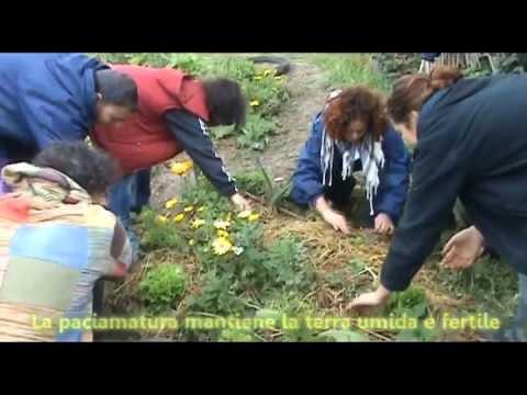 Agricoltura Sinergica - Orto Sinergico - La Città della Luce
