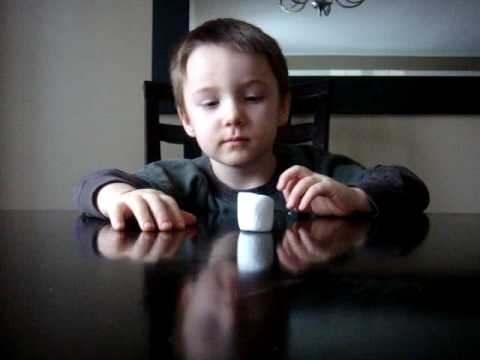 marshmallow test funny kids