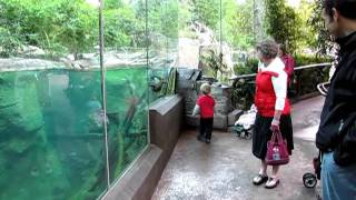 Otter Loves to Play with Kid