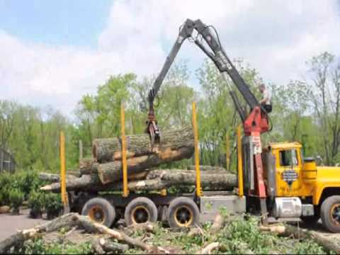Loading a Large Log on a Tree Truck   In Bucks County
