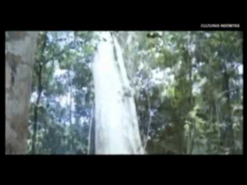 deforestación en la selva peruana