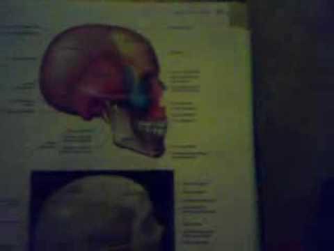 anatomia umana.mp4