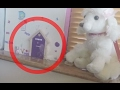 Real Fairy Caught on Camera Collecting Key from Fairy Door