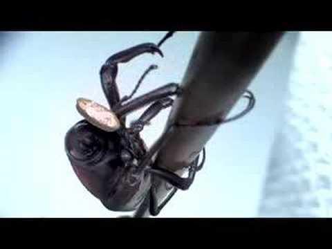 Torte in faccia agli insetti