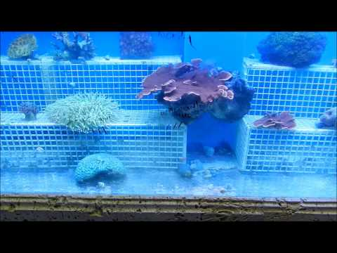Eco Reef Aquariums Episode 35 Pt1