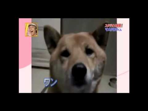 Soft Dog(Eng Subtitles)