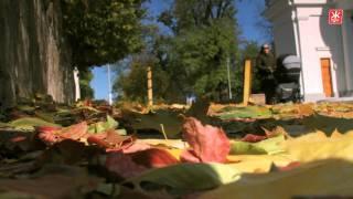 В Житомире Покрова покрыла город желтыми листьями