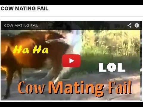 Epic Animal Fucking Fail