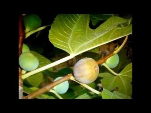 Reino Plantae Jodedores ADOLFO BLONVAL LOPEZ