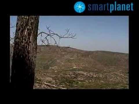 Los bosques del planeta crecen nuevamente