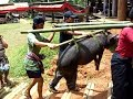 funeral ceremony in Tana Toraja -1