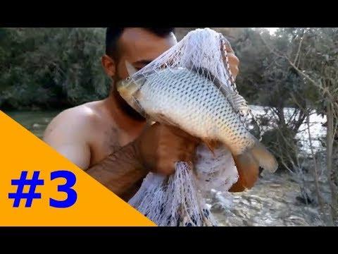 Mỗi ngày chỉ cần ra suối bắt cá kiểu này là đủ sống một năm