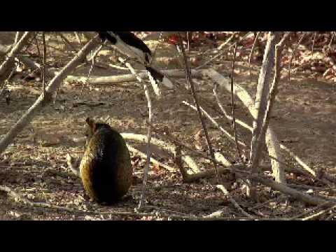 Crise da Biodiversidade Museu Zoologia USP
