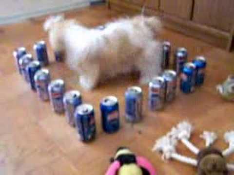 Zatočeni pas sa pepsi limenkama