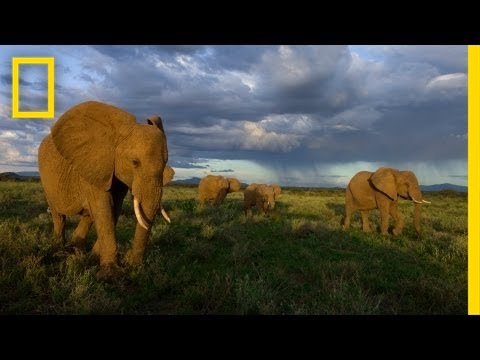National Geographic Live! - Joyce Poole: The Elephant Network