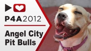 Pit Bulls are AWESOME! - Project for Awesome (Angel City Pit Bulls)