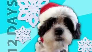 "Animals Sing ""12 Days of Christmas"""