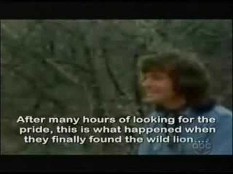 Christian The Lion - Reunited - From The View