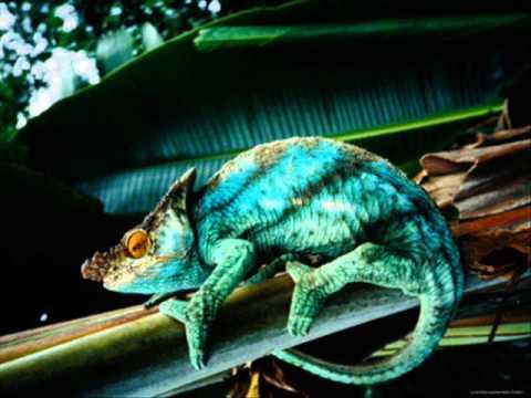 Herbie Hancock - Chameleon (full version)