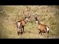 Poľovačka na jeleňa na Novom Zélande 43