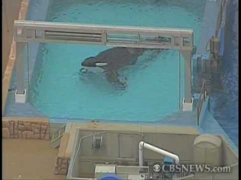 Killer Whale Kills SeaWorld Trainer