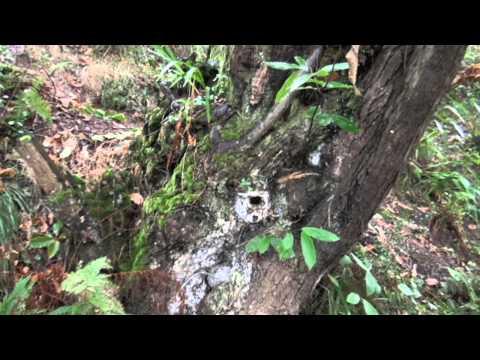 ENTREVISTA Campaña Biodiversidad TODOS SOMOS PARTE