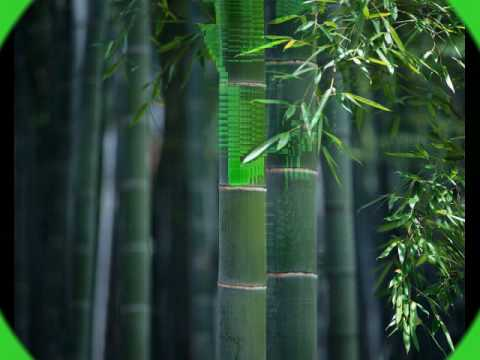 chinese bamboo flute & quotes