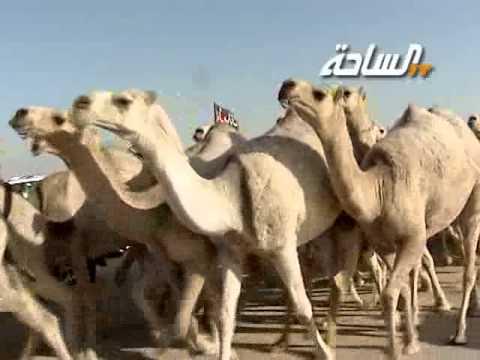 مزاين الكويت 2014 | الرمانات | مسيرة منقية / محمد فيحان الشريف
