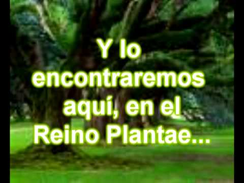 documental sobre el reino plantae