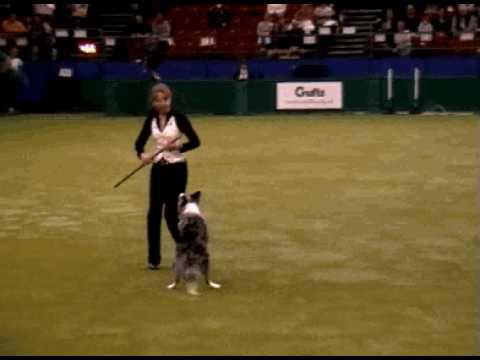 Tina Humphrey Crufts 2007