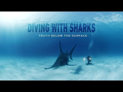 GoPro VR: Diving with Sharks - Truth Below the Surface - UCqhnX4jA0A5paNd1v-zEysw