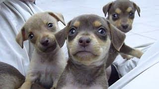 Cachorrinhos - Ch�cara DivertC�o Hotel, Lazer e Divers�o