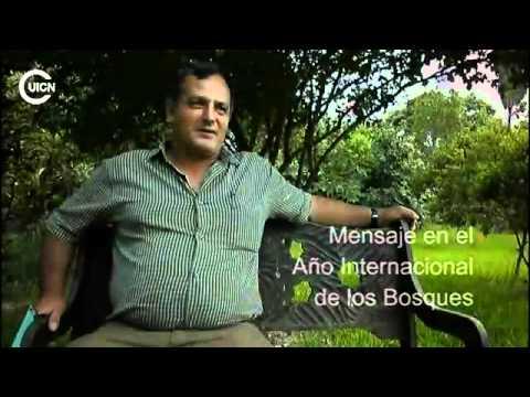 Mesoamerica y su propuesta alternativa a REDD